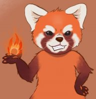 Firefoxes
