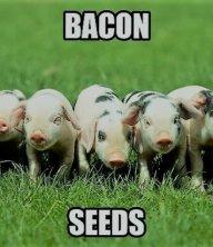baconinhobb